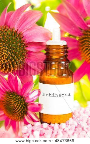Bottle Of Echinacea Essential Oil And Flowers