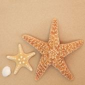 stock photo of cockle shell  - Starfish and cockle shell abstract on sand forming a background - JPG