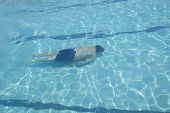 stock photo of swim meet  - man is swimming Freestyle in pool alone - JPG
