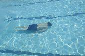 stock photo of swim meet  - man is swimming Freestyle in pool alone - JPG
