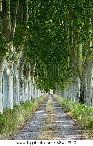Country Road In Provence
