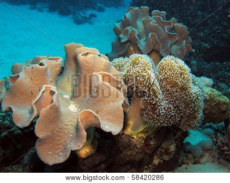 Two soft corals
