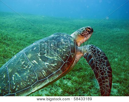 Cute green turtle