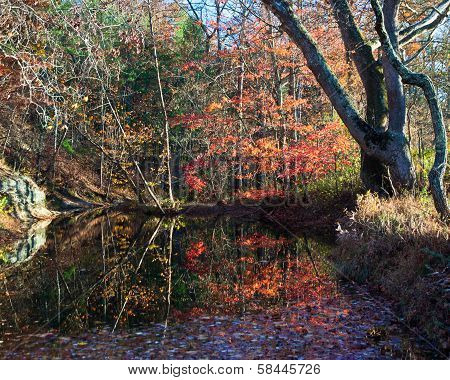 Fall leaves reflected in Stoney Creek