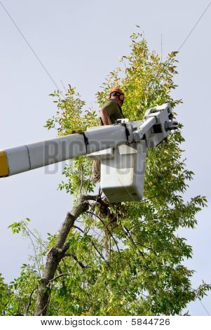 Tree Trimmer Working