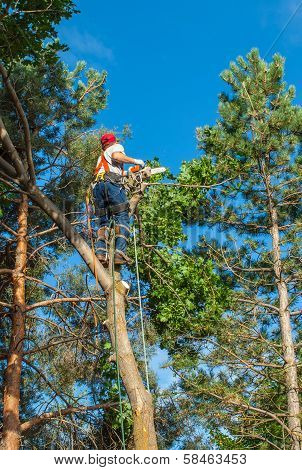An Arborist Cutting Down A Tree Piece By Piece