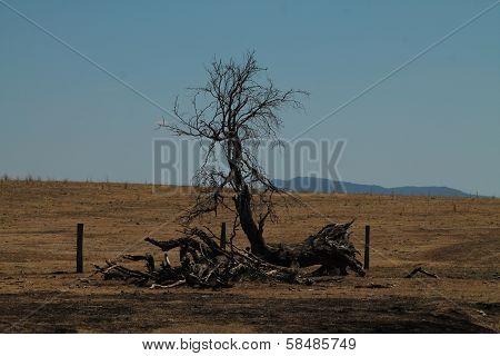 Dry Australia