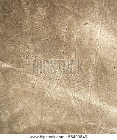 Nazca Lines, Peru - dog