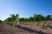 stock photo of heartwarming  - Colourful Summer Vineyard in South Crimea Ukraine - JPG