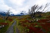 Постер, плакат: Torres del Paine in Chile