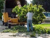 stock photo of arborist  - A Man Putting Branches in a Wood Chipper - JPG
