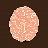 Human Brain On Brown Background