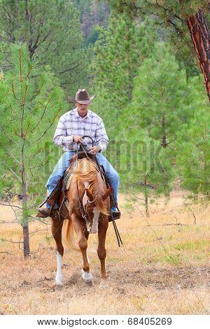 Young Cowboy