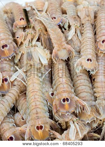 Cicale di mare - Small European locust lobsters