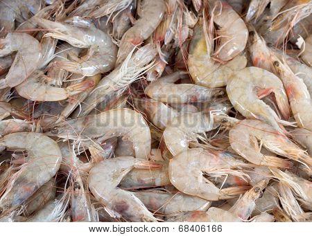 Fresh shrimps on a market