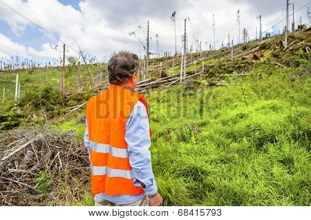 Forest disaster