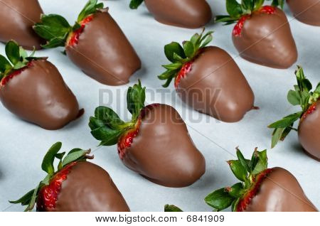 Chocolate Covered Strawberries In Rows
