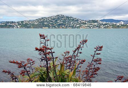 Wellington Flax Flowers In Full Bloom & Mount Victoria