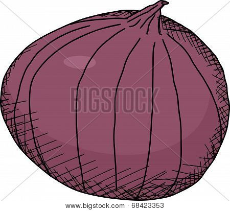 Isolated Red Onion