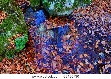 scene with autumn leafage in water