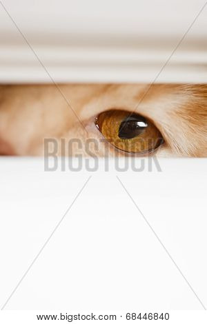 beautiful eyes peeping over the cat out of the hole in the wall