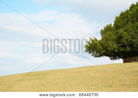 Tree Frames The Sky On An Empty Hill