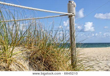 Beach and Dunes
