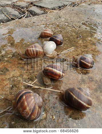 Eight snails