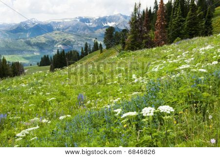 Alpine Wildflower Landscape
