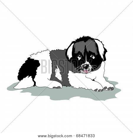 Puppy of  Caucasian shepherd