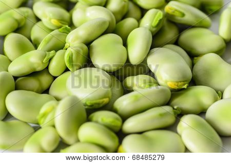 Closeup Of Broad Bean - Background, Texture