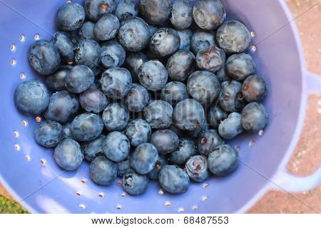 blueberries in dish