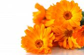 picture of orange blossom  - bouquet of orange calendula blossoms on white background - JPG