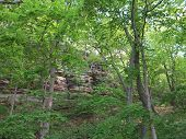 picture of starving  - Box Canyon and beautiful spring time trees at Starved Rock State Park