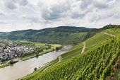 image of moselle  - Vineyards in Germany along river Moselle near Punderich - JPG