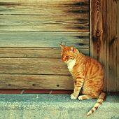stock photo of greek-architecture  - Greek red cat in wood doorway at the old greek village  - JPG