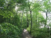 picture of starving  - Sunlight Shadows and beautiful spring time tree growth at Starved Rock State Park - JPG