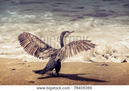 Cormorant in front of Pacific ocean.