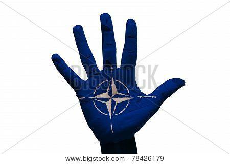 Palm Flag Nato