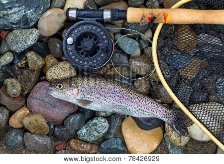 Single Trout Caught
