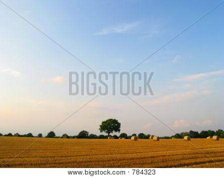 Beautiful crop-field