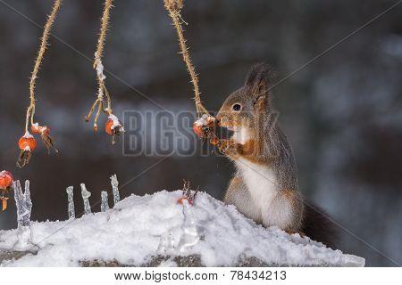 Squirrel Winter Food