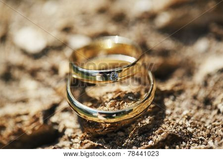 Wedding Rings On Tree Bark
