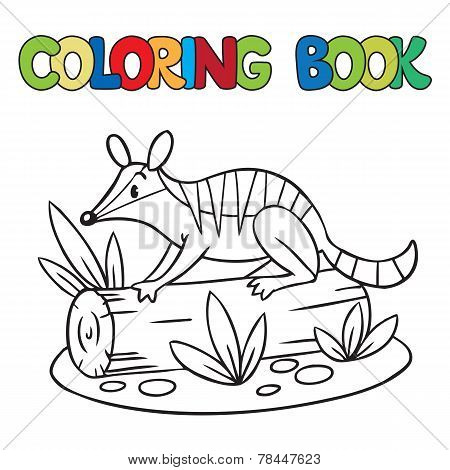Coloring Book Of Little Numbat