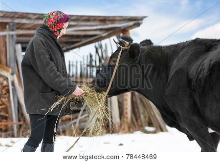 rancher in casual  winter clothesin  stands  with cow