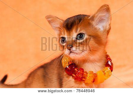 Elegant Kitten