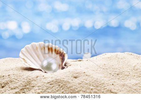 Pearl oyster in the sand. Blurred sea at the background.