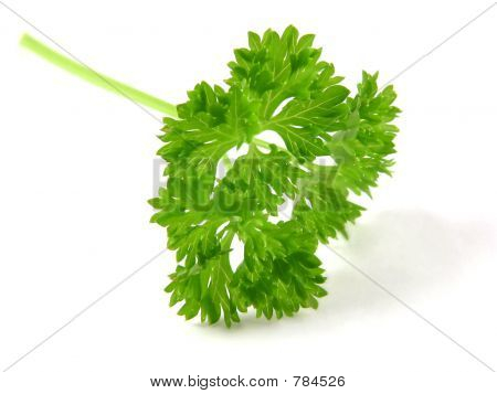 Single parsley