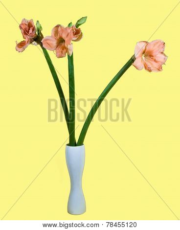 Bouquet Of Amaryllis  In A Vase