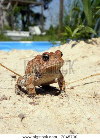 posing frog